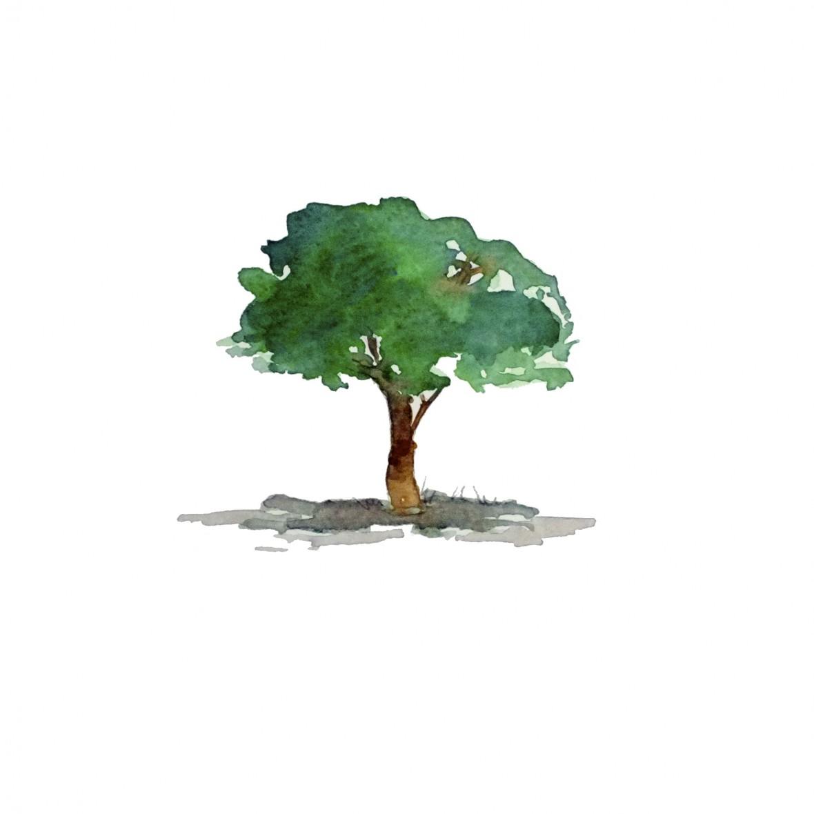 Etude arbre (1)